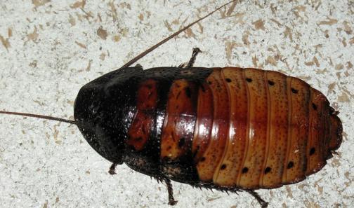 b Как бороться с тараканами /b в квартире.